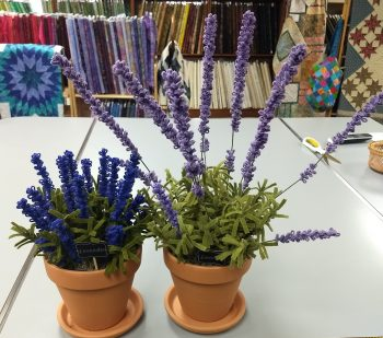 Lavender in a Pot